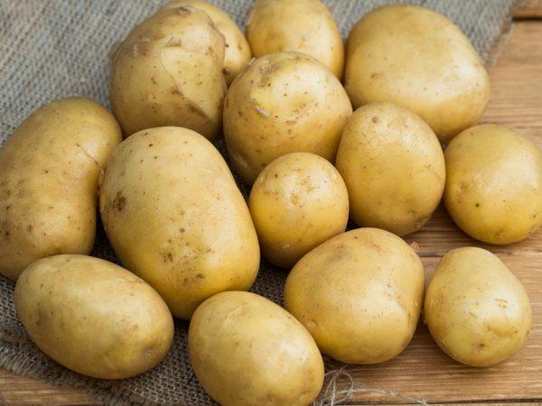 Описание сорта картофель Голубизна - особенности выращивания