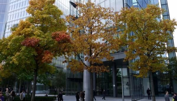Дуб красный: описание и фото дерева