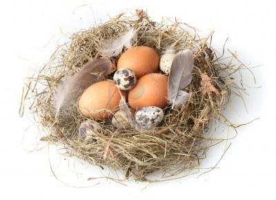 Яйца куриные и перепелиные: кто кого