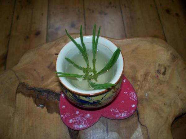 Стимулятор корнеобразования: советы садоводов
