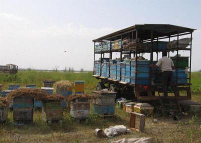 Как своими руками построить павильон для пчел