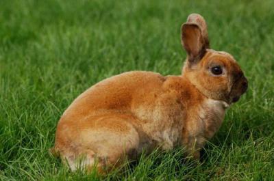 Какая нужна сетка для клетки кроликов: размеры