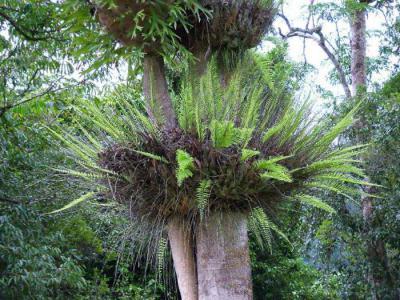 Эпифит (растение): что это такое и где растет