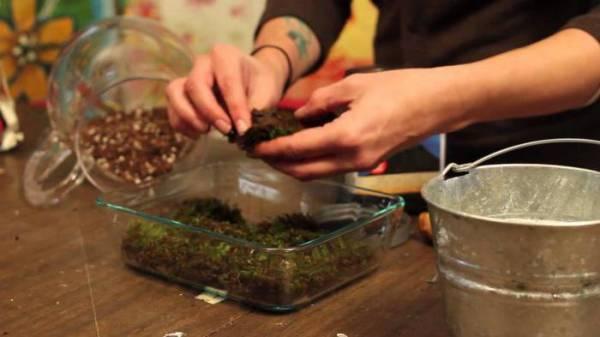 Как вырастить в домашних условиях мох: советы, тонкости, секреты