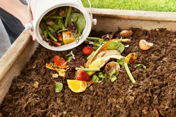 Подкормка растений: эффективные удобрения, способы их внесения, советы экспертов