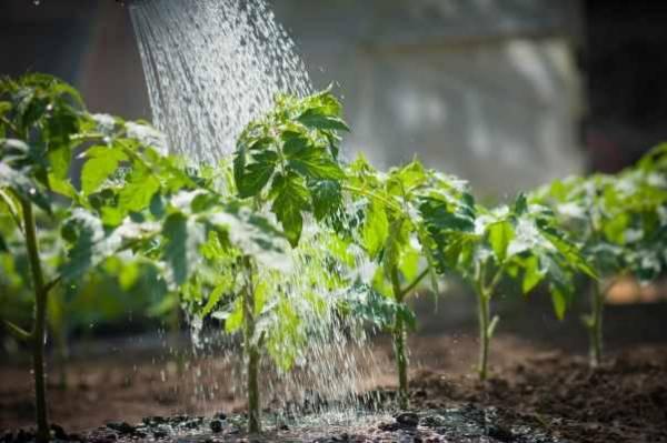 Дрожжи как удобрение для растений