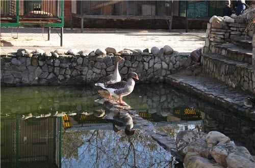 Как сделать бассейн для уток и гусей