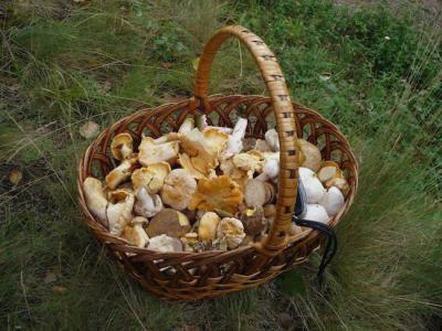 Как проверить, ядовитый гриб или нет, в домашних условиях