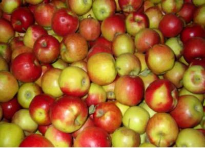 Джонаголд (яблоня): описание сорта, фото