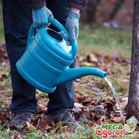 Календарь садовода: основные работы в саду осенью