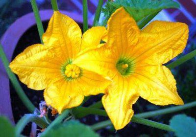 Однодомные растения: описание, представители