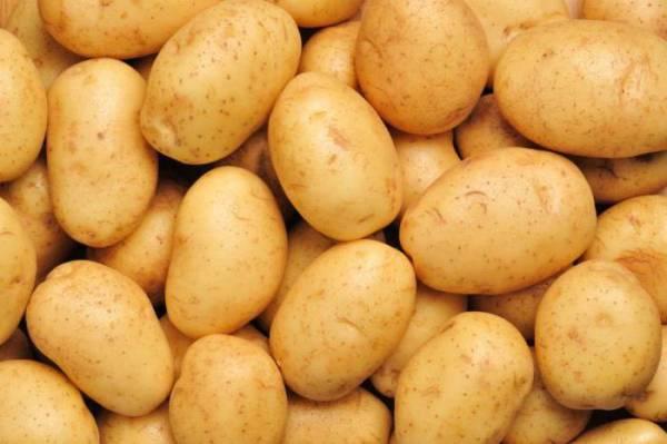 Лучшие ультраранние сорта картофеля