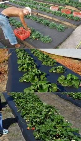 Агроспан - укрывной материал для защиты растений