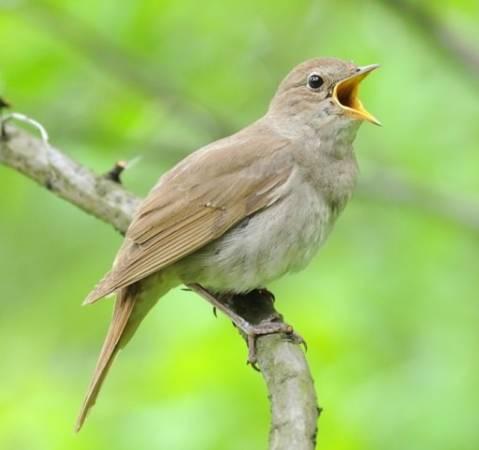 Совет 1: Какие виды декоративных домашних птиц самые неприхотливые