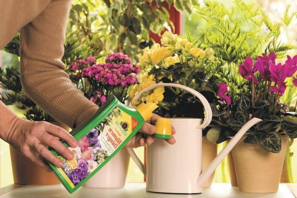 Натуральные и минеральные подкормки для комнатных цветов