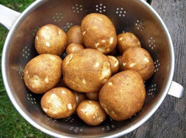 Картофель, сорт Киви: описание, фото, отзывы