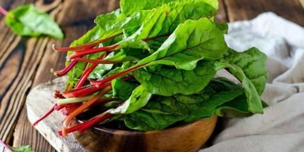 Мангольд - что это такое и полезные свойства, рецепты приготовления супов, салатов, пирогов и голубцов