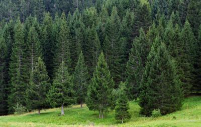 Интересные факты о продолжительности жизни деревьев