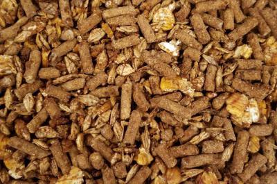 Чем кормить барана в домашних условиях? Особенности, требования и рекомендации