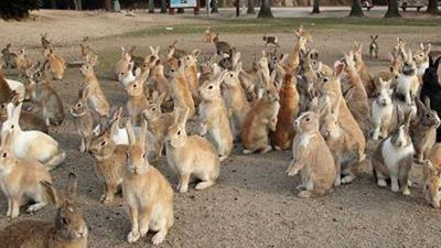 Способы лечения стоматита у кроликов: описание, причины и симптомы