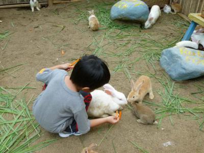 Можно ли давать кроликам хлеб: особенности содержания и ухода, рацион питания, советы