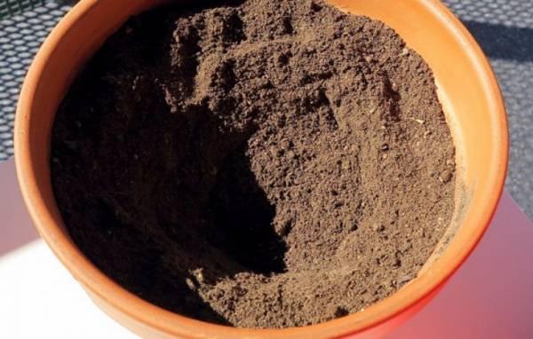 Тонкости выращивания мурайи из семян