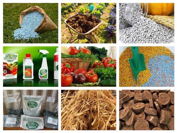 Правильная подкормка растений удобрениями