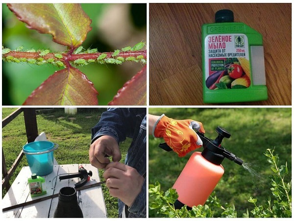 Зеленое мыло - от вредителей: инструкция по применению, отзывы