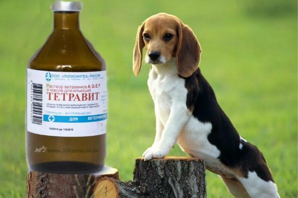 Тетравит: инструкция по применению в ветеринарии