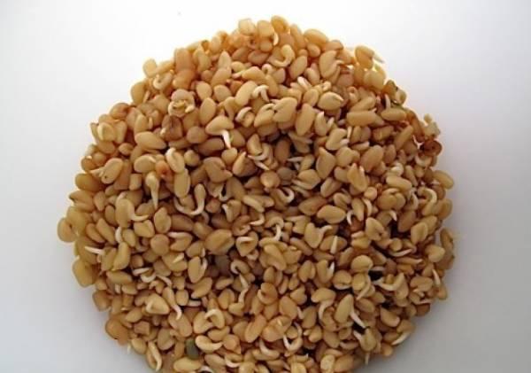 Семена пажитника: применение, лечебные свойства и противопоказания