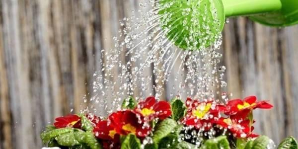 Как поливать цветы и комнатные растения