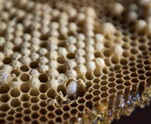 Можно ли есть мед в сотах, как достать мед из сот дома
