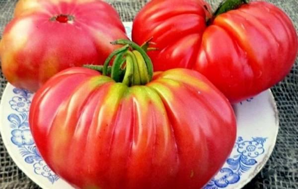 Урожайность и описание сортов томатов «Инжир Красный» и «Розовый»