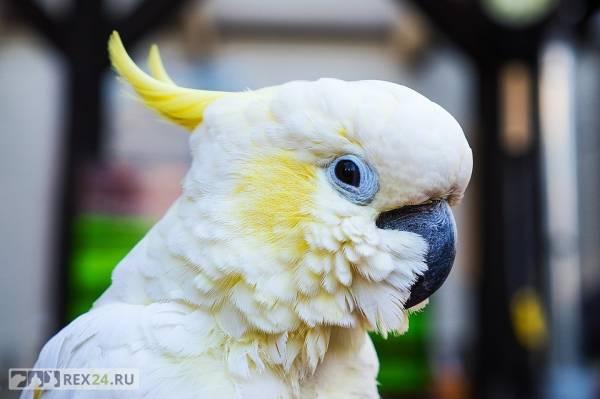 Какую птицу лучше всего завести в квартире