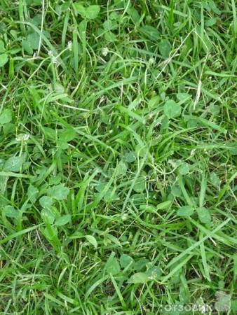 Отзыв: Средство для уничтожения сорняков на газонах злаковых трав Зеленая аптека садовода Гербицид Линтур - То ли пользоваться, то ли не пользоваться