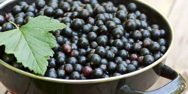 Настойка из черной смородины - рецепты