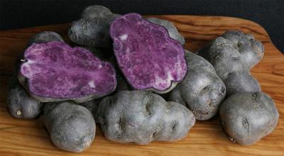 Необыкновенно полезный фиолетовый картофель
