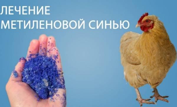 От чего помогает и как разводить метиленовую синь для кур
