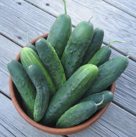 Огурцы Либелла Ф1: описание сорта, выращивание