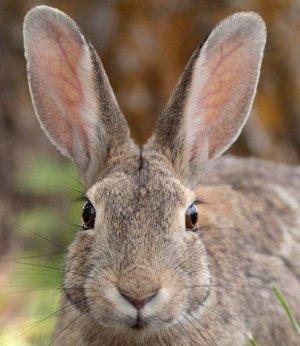 Что давать кроликам от глистов