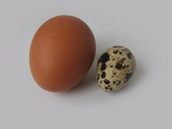 Чем и по каким признакам отличаются перепелиные яйца от куриных