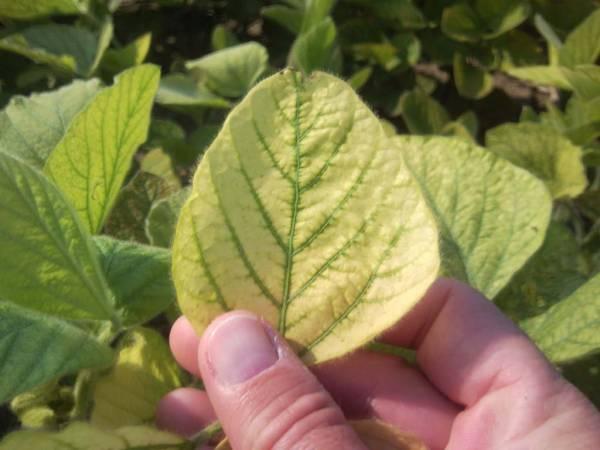 Марганцовка для растений: применение в саду, на огороде, для комнатных культур