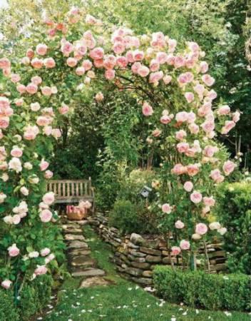 Когда лучше сажать розы - весной или осенью? Посадка роз в открытый грунт