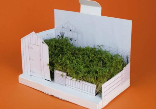 Кресс-салат на подоконнике: как выращивать эффективно