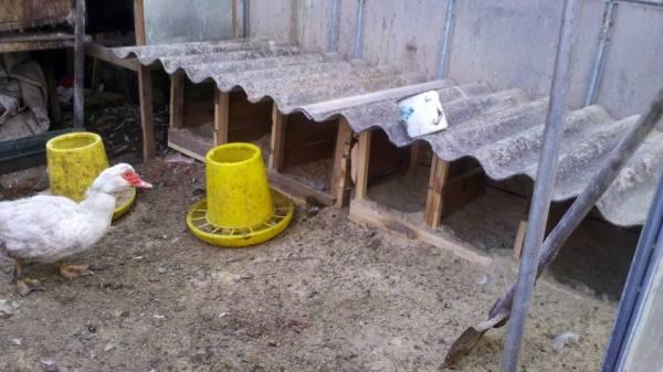 Как сделать гнездовой домик для индоутки самостоятельно