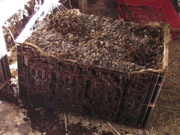 Особенности использования кроличьего навоза как удобрения