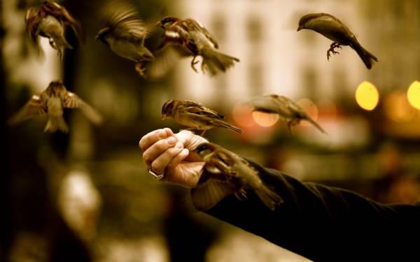 Почему птицам нельзя пшено