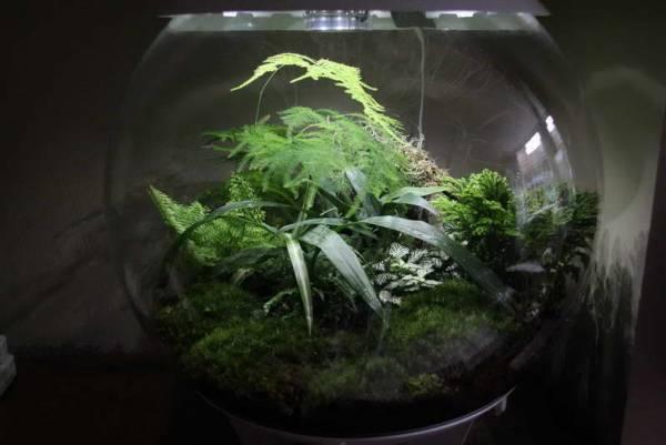 Цветок селагинелла Уход в домашних условиях Размножение черенками Фото видов