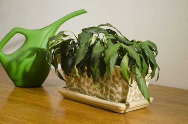 Удобрение Циркон: инструкция по применению, нормы для садовых и комнатных растений