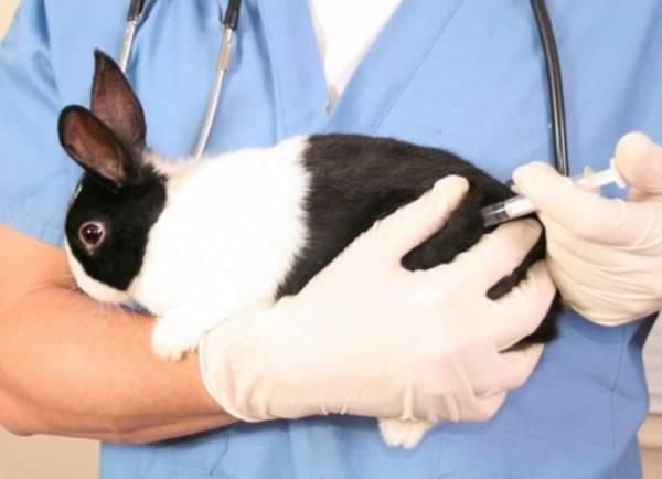 Вакцинация кроликов: какие прививки, когда делать